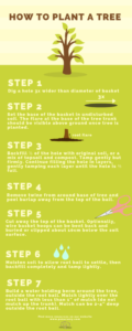 HOW TO PLANT A TREE (1)