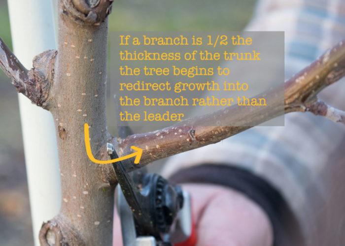 growthdiagram