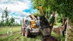 machine operator digs a nursery grown tree with a tree spade