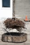 An exposed root ball encased in a wire basket on a tree nursery