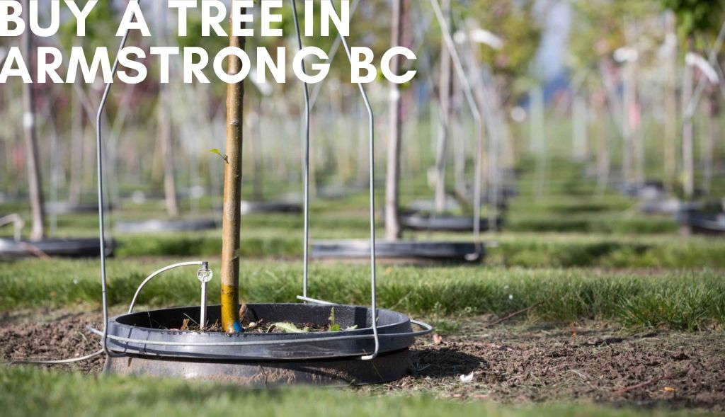 potted trees at Purple Springs Nursery - a tree nursery in Armstrong BC