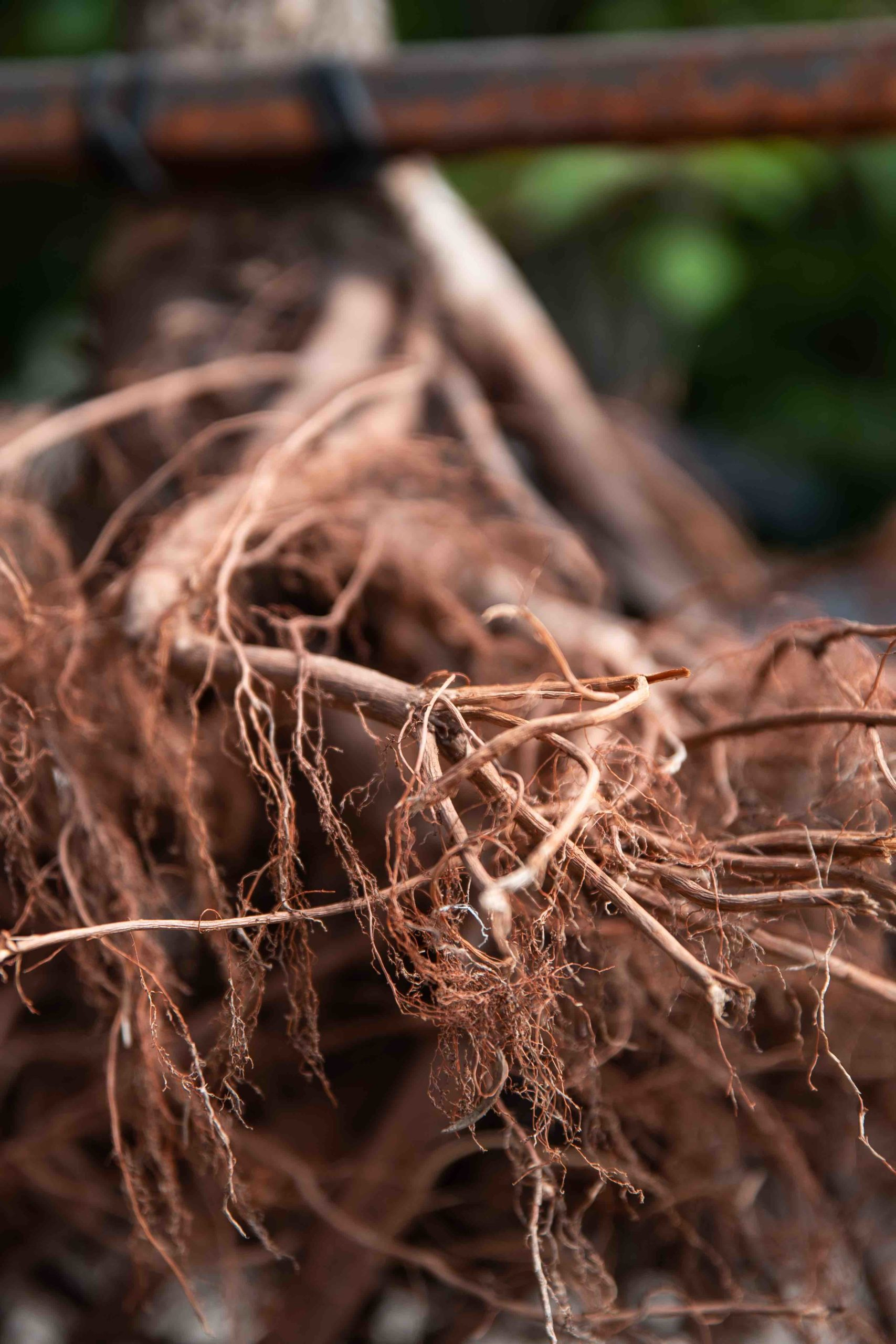 root pruning is a regenerative agriculture practice